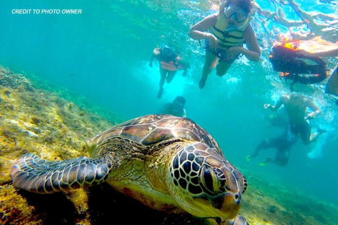 snorkeling guides