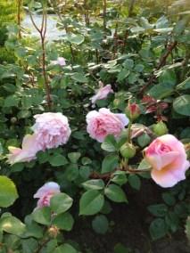 negy-evszak-kerteszet-siofok-bemutato-kert (34)