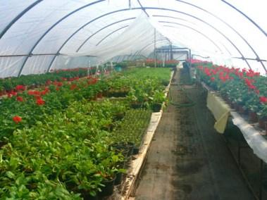 négy-évszak-kertészet-siófok-áruda- (10)
