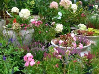 négy-évszak-kertészet-siófok-áruda- (18)