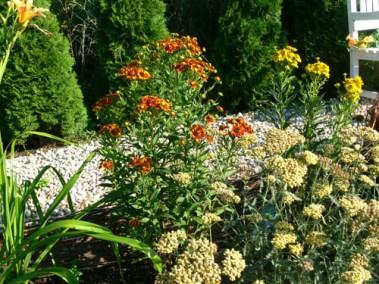 négy-évszak-kertészet-siófok-áruda- (21)