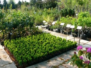 négy-évszak-kertészet-siófok-áruda- (42)
