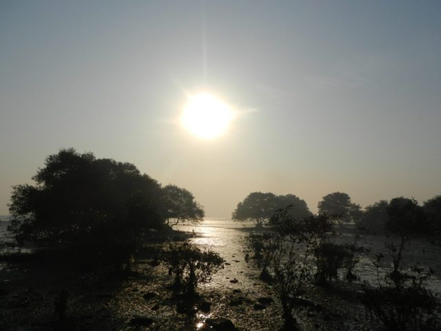 mangrove patch of Sewri