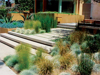 grasses used in formal landscape