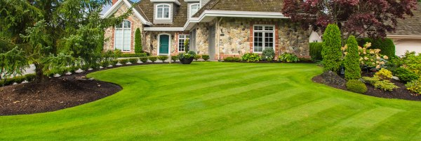 seattle lawn care hot