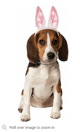 2018 04 08 15 47 29 Rubies Costume Company Dog Cat White Bunny Ears Small Medium Chewy.com