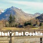 What's NOT Cooking #11