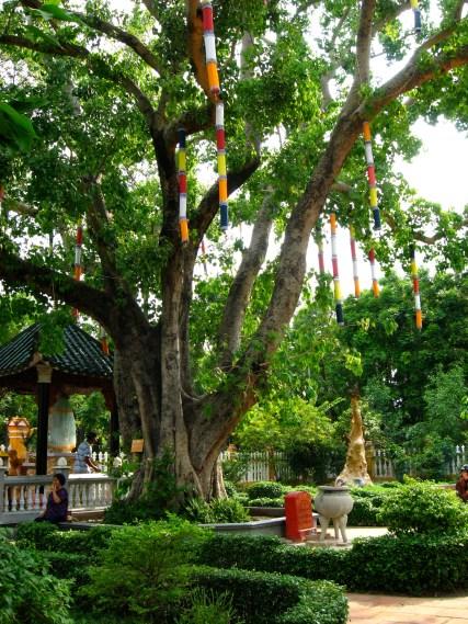 bodhi_tree_giac_lam