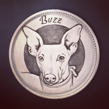 Buzz the Whippet