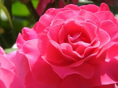 敬老の日に花をプレゼントする理由!りんどうが定番?他に種類は?