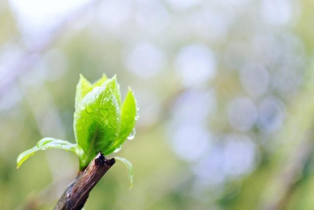 二十四節気4月の穀雨の意味をわかりやすく教えて!2018年はいつ?