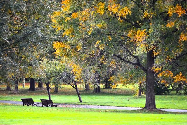 初秋と仲秋と晩秋の違いとは?時期によって違う秋の時候の挨拶!