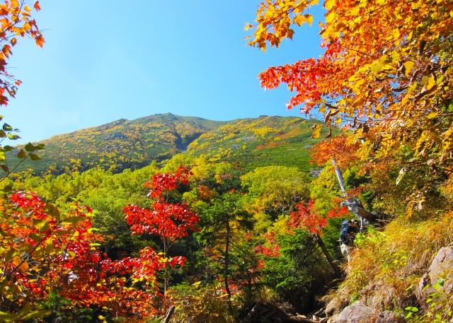 紅葉する木としない木があるのはなぜ?葉が赤色と黄色になる違いは?