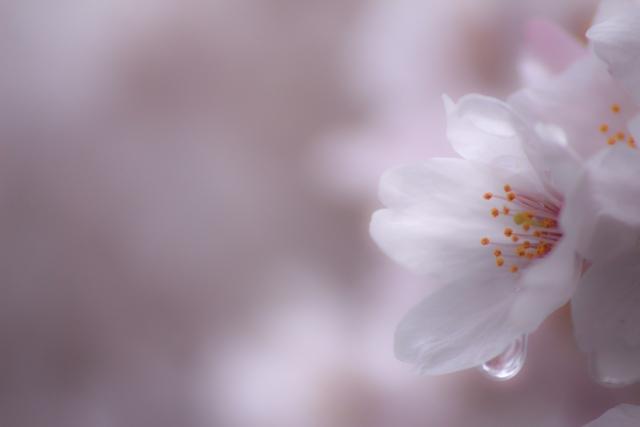 春は雨の日が多い?春ならではの雨の名前や表現の種類と特徴をご紹介
