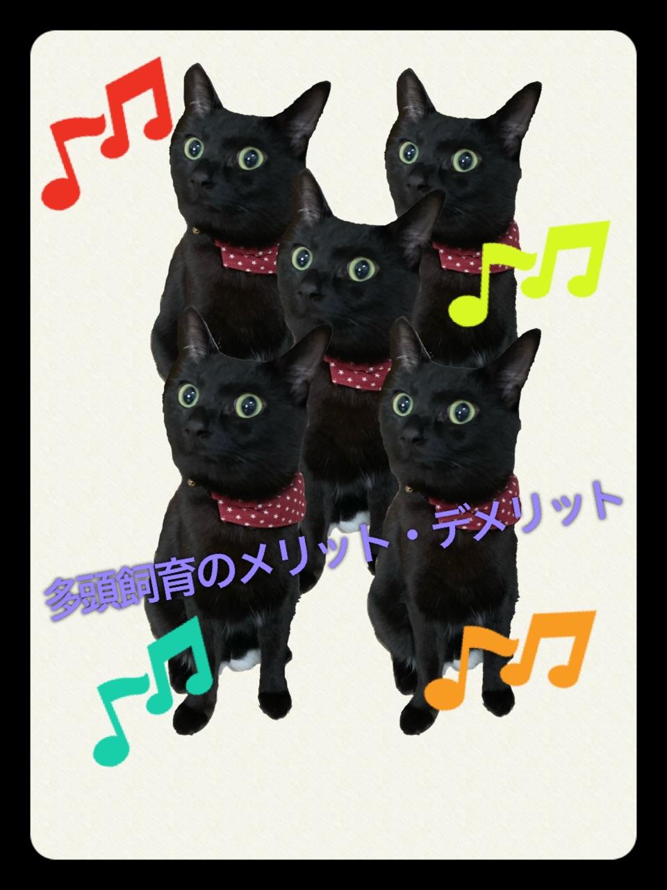 猫の多頭飼育の注意点【メリット・デメリット】