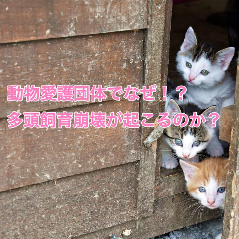 動物愛護団体でなぜ多頭飼育崩壊が起こるのか?