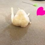 プリケツ猫