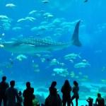 ジョージア水族館