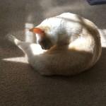 毛繕いする猫