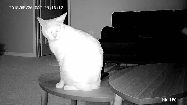 セキュリティカメラに映る猫
