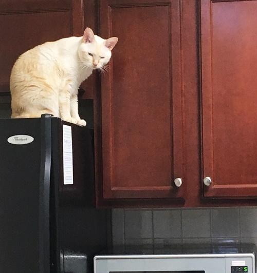 躊躇する猫