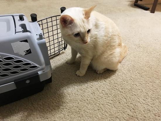 ためらう猫