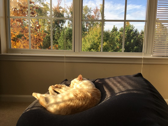 秋の景色と猫