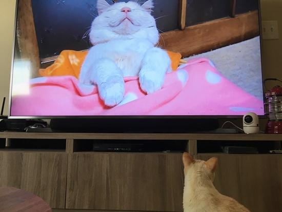 猫セラピー