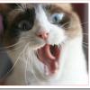 猫の喧嘩の止め方は?怪我の応急処置は?