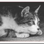 老猫がご飯食べない時どうする?食欲不振で吐くのは病気?
