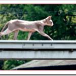 猫を車でひいてしまった時の対処法は?どうすればいいの?