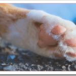 猫の肉球が乾燥ひび割れの予防対策!治療におすすめクリームは?