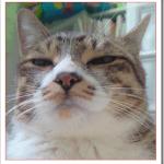 猫が何回もくしゃみをするのは風邪か鼻炎?病気のおそれは?