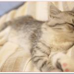 子猫生後1ヶ月~3ヶ月の育て方は?エサはどうする?