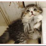 猫がしっぽの先を動かす理由は?どんな気持ちなの?