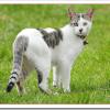 猫の出産回数や産む数は何匹?何歳まで子供を産めるのか?