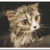 猫のひげをお守りにすると金運効果アップ?財布に入れるとご利益?
