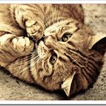 猫アレルギーの治し方と克服法や対策商品は?新治療薬が発明?