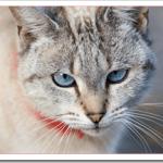 子猫の目やにと涙の原因は?色や量や頻度から病気を判断できる?