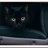 猫が死んだ後の処理はどうするの?簡単な葬儀の方法は?