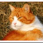 猫アレルギーで咳が止まらない場合の対処法は?咳を止める市販薬は?