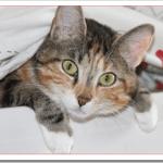 猫のこたつが危険なのは低温火傷と一酸化炭素中毒?熱中症や脱水症状の対策は?