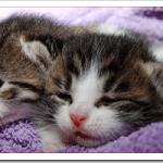 猫の寒さ対策は?寒がりの場合の部屋温度や留守番は?
