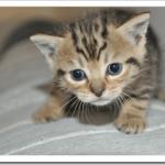 猫が何度も餌を吐く原因は?胃液や黄色の場合の対処法は?