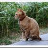 猫が吐くのは病気かキャットフードが原因?色や嘔吐物別の対処法は?
