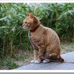 猫が吐くのは病気?色や嘔吐物別の原因や対処法は?