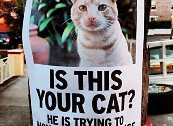 室内飼い猫が脱走した!?探し方と捕まえ方。押さえておきたい6つのポイントとは?