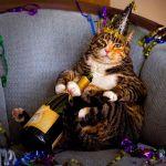 猫好き必見イベント2016まとめ!開催日時や開催場所など詳細情報