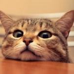 猫のおしっこが出ない・・原因と疑うべき病気と対策。手遅れになる前にできることとは!?