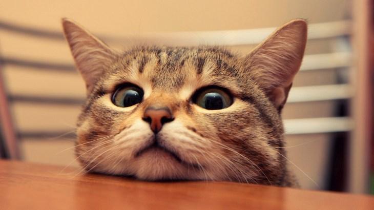 [緊急事態]猫のおしっこが出ない・・原因となっている病気と対策。